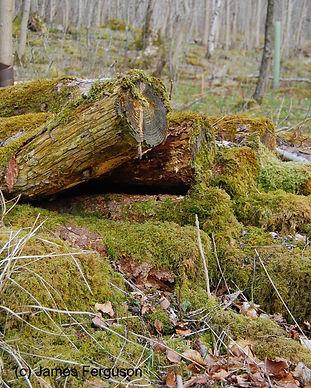 Grass Wood - James Ferguson (10)_edited.