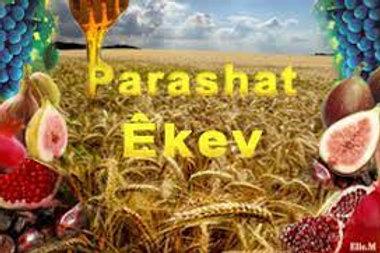 PARASHAT EKEV. 07/25/2021