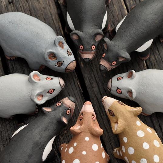 Tasmanian native marsupials
