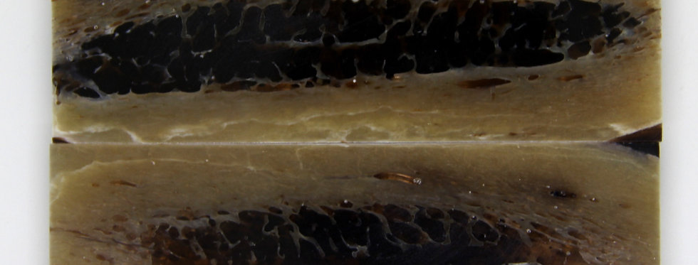 stab. Kuduknochen-Schalenpaar 4