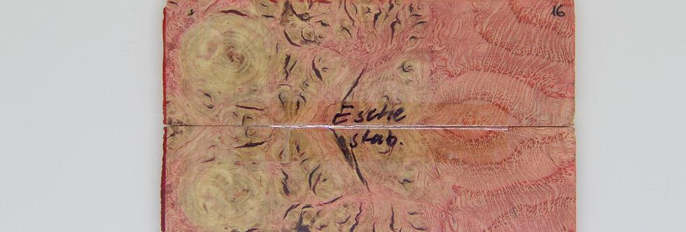 stab. Esche-Schalenpaar 16