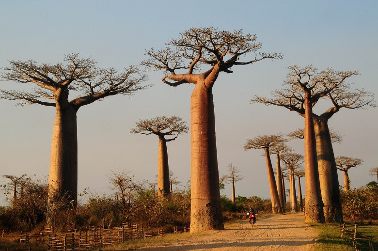 beyonce black parade baobá