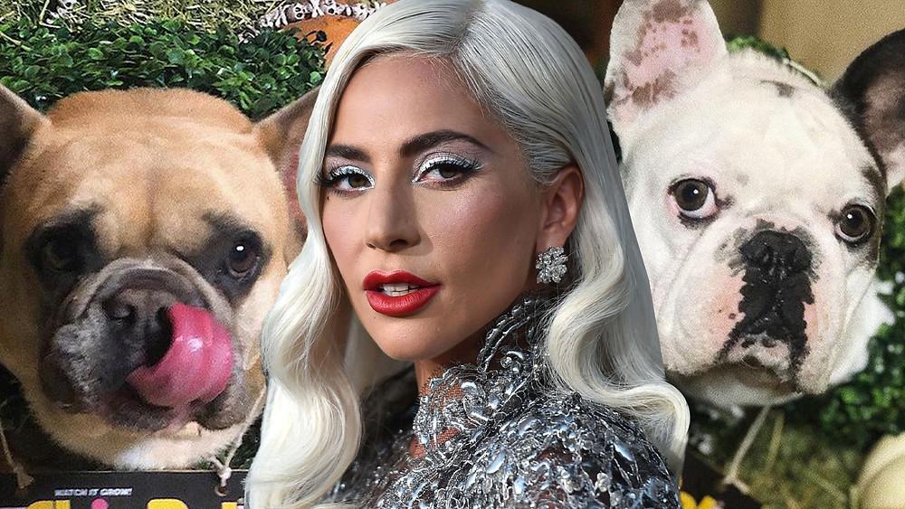 Após assalto a tiros, cães de Lady Gaga são roubados e profissional da cantora é baleado