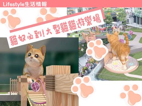 【生活情報|貓奴必到! • 大型貓貓遊樂場】