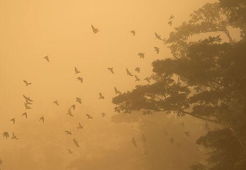Warm Fog s.jpg