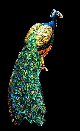 webiconspng - Peacock PNG in High Resolu