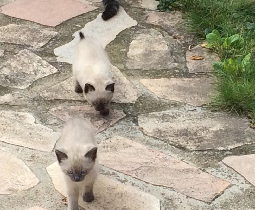 Quinie et Gâtée bébés