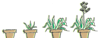 FOURPLANTS.png