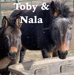 Toby Nala AOTR Title