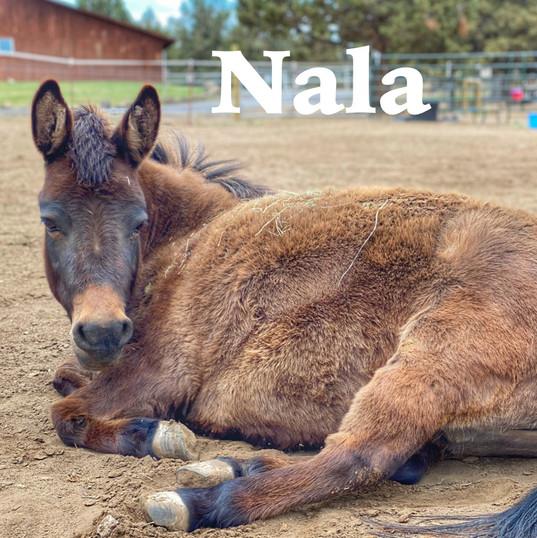 Nala Title Page