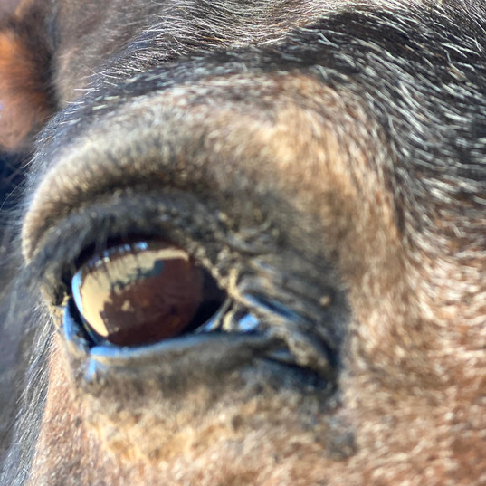 Toby eye