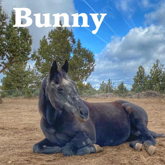 Bunny AOTR Title