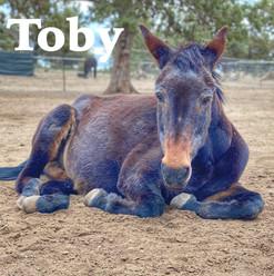 Toby AOTR title