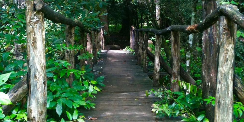 The Illuminated Path: Year 2 - Course 2