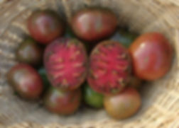tomato A.jpg