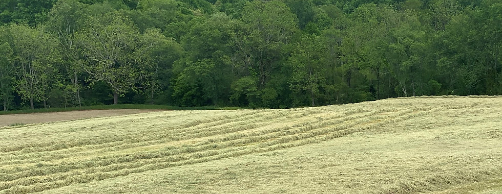 wallace 5-30-21 hay test edit.jpg