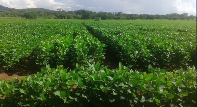 trial soybean 9-2-20.PNG