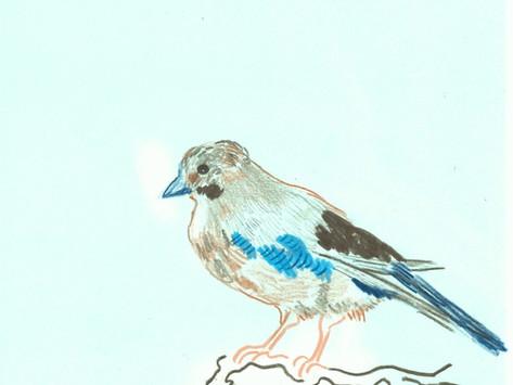Bewildering Birdsong