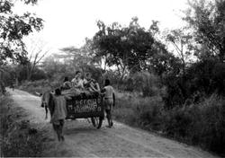 Scotch Cart02_Chibuwe