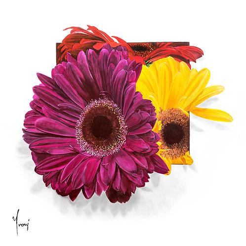 """Gerbera""   Giclee Lithograph Canvas Print"