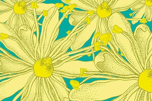 Postkarte Blüte Linde hell