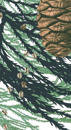 10_Riesenmammutbaum