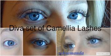 Camellia Volume Lashes