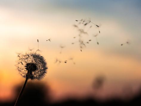 Why we chose (to) 'Make a Wish'?