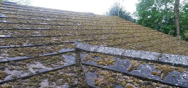 Moss Covered Roof.jpg