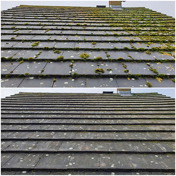 Before and after roof demoss.jpg
