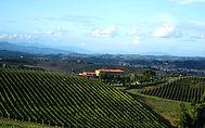 País del vino