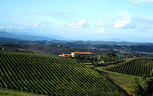 Bodega Wein Villa Finca Costa Blanca