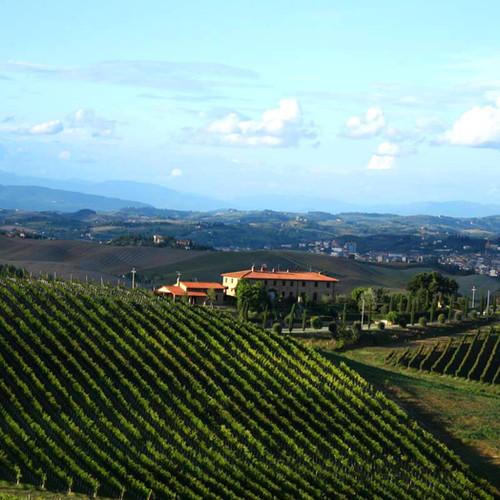 Wine Company Executive Search