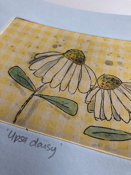 Upsa daisy Varied Edition