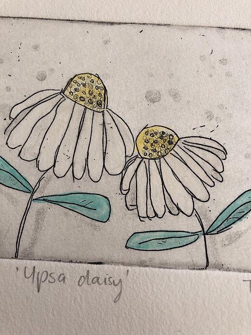 Upsa daisy
