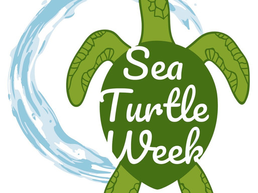 Semana da Tartaruga Marinha | Sea Turtle Week