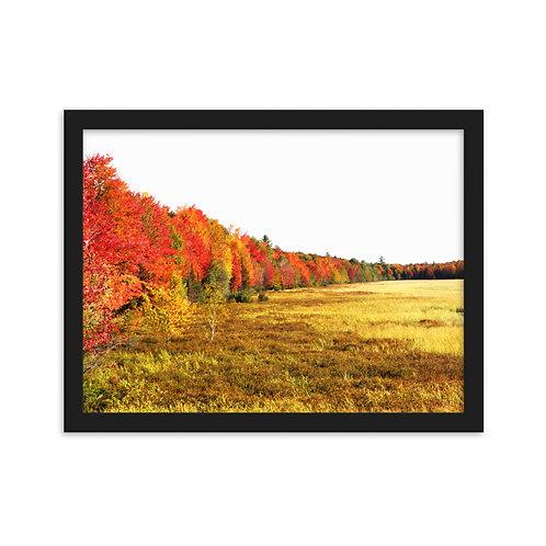 Fall Tree Line - Michigan's UP