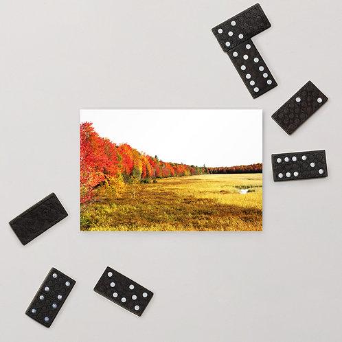 Fall Treeline Standard Postcard