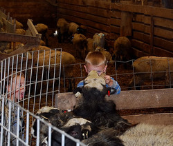 No visit is complete without a trip to the animal barn