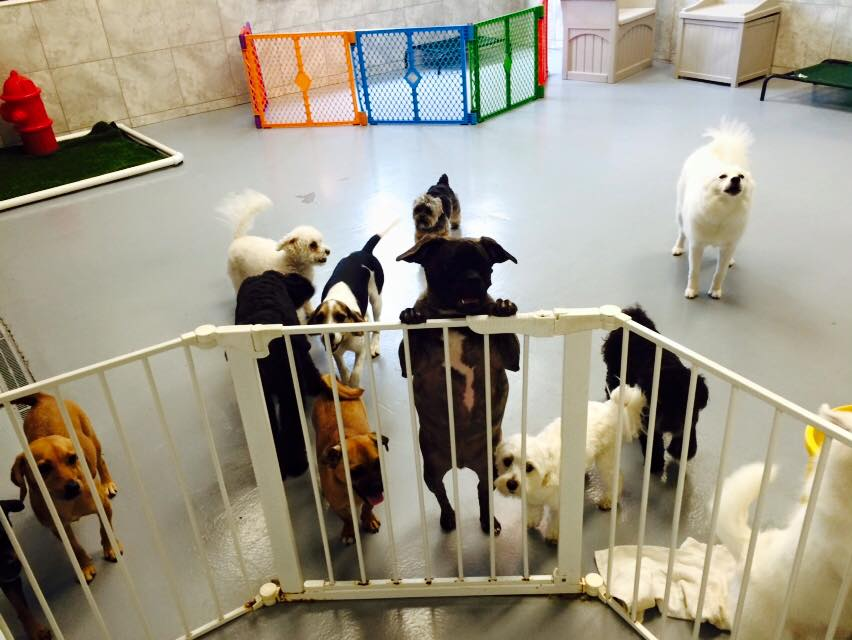 Doggie Daycare Friends