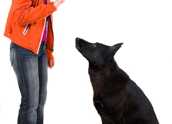 Basic Dog Training 101