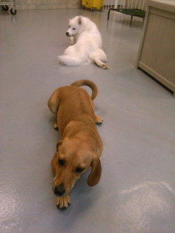 Your dog will love our daycare!