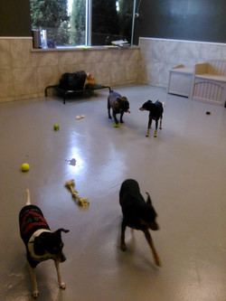 Doggie Daycare Play Time!