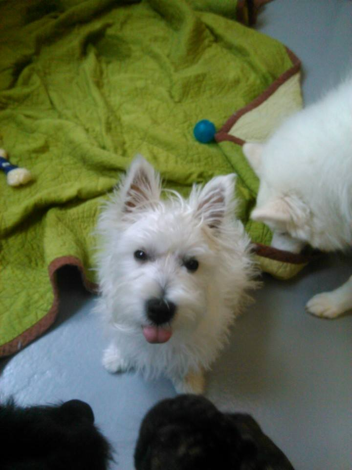 Social Stimulation in Dog Daycare
