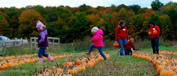 pumpkinjump