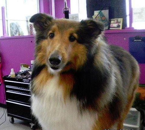dog 2 (1)