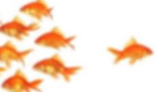 fish_edited.jpg