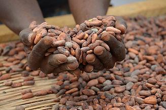 organic-cocoa-drying_1_1.jpg__1200x1200_