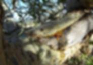 Resin on the tree.jpg