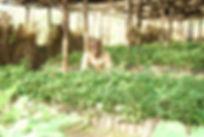 Ess_Patchouli-seedlings.jpg